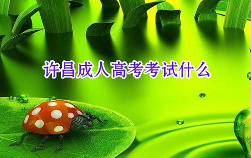 许昌成人高考网:许昌成人高考考试什么?